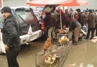 پرندگان شکارشده از بازار لنگرود جمع آوری شدند