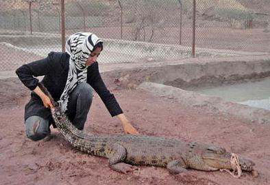 زن موفق ایرانی که کروکودیل پرورش میدهد