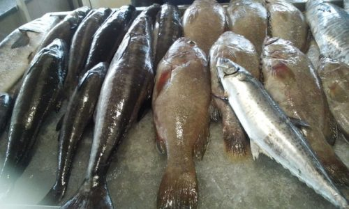 افزایش چشمگیر قیمت ماهی