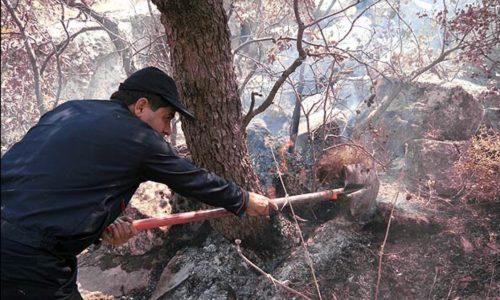 ٣٠هکتار از جنگلهای گیلان دچار آتش سوزی شد
