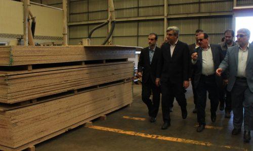 استاندار پیشنهاد داد؛ استفاده از ظرفیت اراضی ملی برای کشت چوب و جلوگیری از زمین خواری
