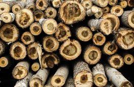 کشف ۱۲ تن چوب جنگلی قاچاق در آستانهاشرفیه