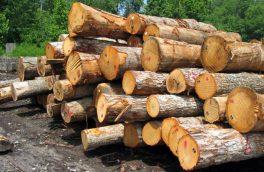 توقیف محمولههای چوب و دام قاچاق در آستارا