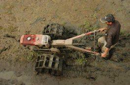 شخم زمستانه در مزارع برنج شهرستان رودسر گیلان