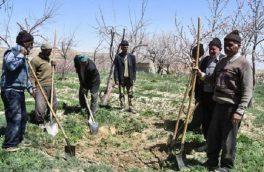 ۸۰ هزار گیلانی بیمه صندوق کشاورزان و روستائیان هستند
