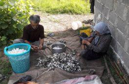میزان تولید پیله تر ابریشم در کشور افزایش یافت