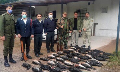 فرمانده یگان حفاظت محیط زیست گیلان خبر داد: دستگیری شکارچی ۴۲ قطعه پرنده حمایت شده باکلان در گیلان