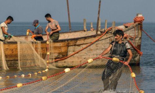 صید ۲۴۷ تن انواع ماهی از آبهای ساحلی گیلان