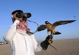 قوشبازان کشورهای حاشیه خلیج فارس در رویای شاهینهای گیلان