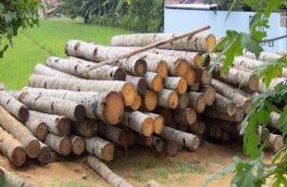 رئیس اداره منابع طبیعی رشت خبر داد کشف و ضبط ۳۹ اصله چوبآلات جنگلی در یک کارگاه چوببری