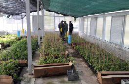 گلخانه پژوهشی کاربردی در لاهیجان آماده شد