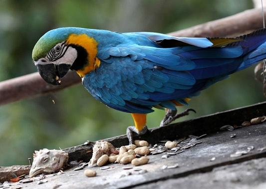 ونزوئلا بهشت طوطیهای زیبا و رنگارنگ +عکس