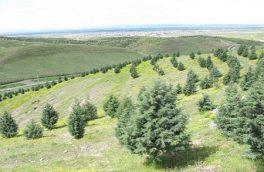 مدیرکل منابع طبیعی گیلان خبر داد: تخصیص اعتبار یکمیلیاردی جهت تقویت مراتع گیلان