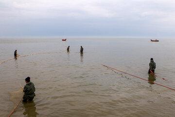 پایان فصل صید ماهی استخوانی دریای خزر