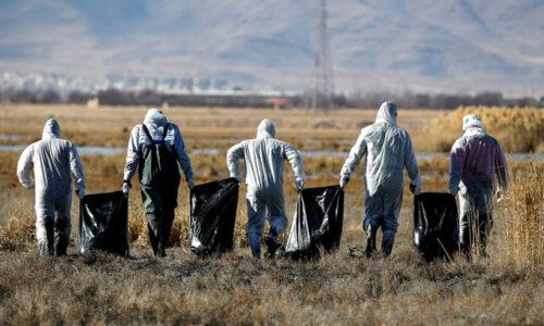 مدیرکل دامپزشکی گیلان: موردی از آنفلوانزای فوق حاد پرندگان در گیلان مشاهده نشد
