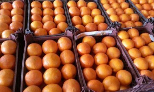 ذخیره مرکبات برای میوه شب عید در گیلان