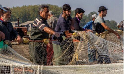 ۳۳۰ تن ماهی از آبهای خزر در گیلان صید شد