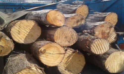 کشف و ضبط ۱۵ تن چوب قاچاق در اتوبان سیاهکل