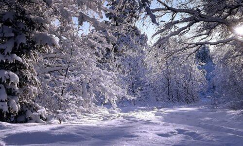 کاهش ۲۰ درجهای دمای هوا در گیلان