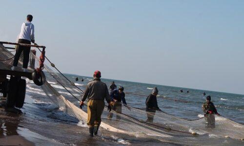 کاهش ۴۲ درصدی صید ماهی در گیلان/ میانگین صید ماهی در هر شرکت تعاونی ۱۰ تن است