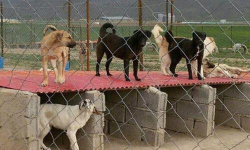 شهرداری آستارا عقیمسازی سگهای بیصاحب را آغاز کرد