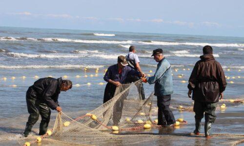 صید افزون بر ۱۳۸ تن از ماهیان استخوانی در بندرکیاشهر