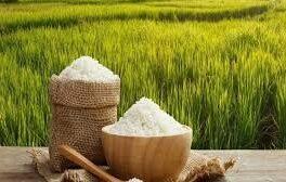 مدیر جهاد کشاورزی لنگرود مطرح کرد؛ افزایش تقاضای خرید شالیزارها از سوی هموطنان استانهای کم آب