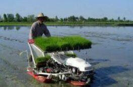 رشت، بزرگترین تولید کننده برنج کشور