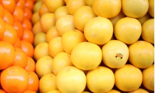 ۶۵ درصد محصول مرکبات باغات گیلان برداشت شد