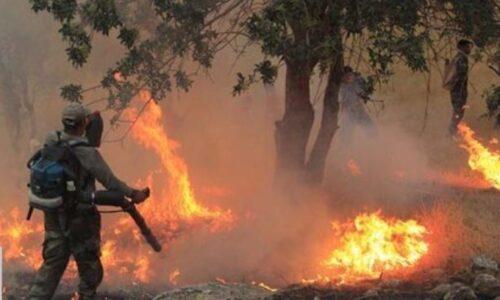 مدیرکل منابع طبیعی گیلان عنوان کرد؛ اطفای ۲۳ هکتار از عرصههای جنگلی گیلان طی دو روز