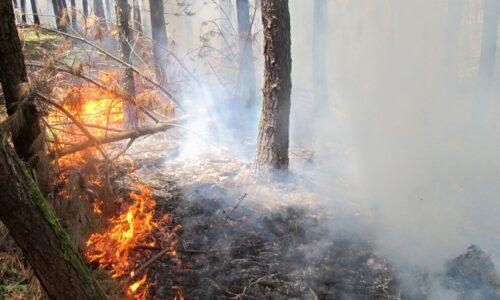جنگل های سبز گیلان در هراس آتش ندانم کاری