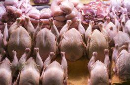 معاون سازمان صمت گیلان تأکید کرد: برخورد شدید قضایی در انتظار فروشندگان خارج از شبکه مرغ در گیلان است