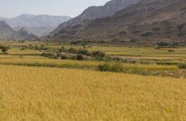 برنامه جامع در سه حوزه اراضی کشاورزی گیلان تدوین می شود
