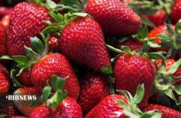 توت فرنگی نوبرانه گیلان در بازار