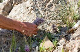 گیاهان دارویی جان مرد اقلیدی را گرفت