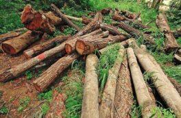 رئیس اداره منابع طبیعی آستانه اشرفیه خبر داد جلوگیری از قاچاق درختان دستکاشت در آستانه اشرفیه